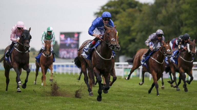 Harry Angel (blue): stronger and more mature this season