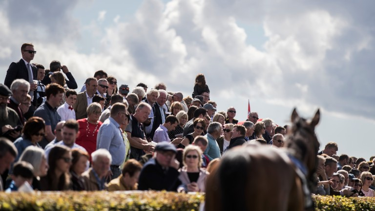 Galway: racegoers study the form and the runners by the paddock