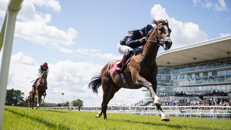 Amedeo Modigliani: a really eyecatching winner at Galway