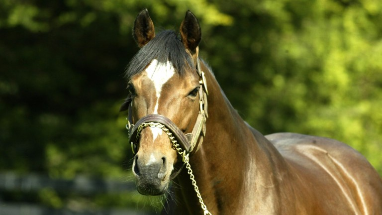 Galileo: a popular choice of sire for owners of Danehill mares