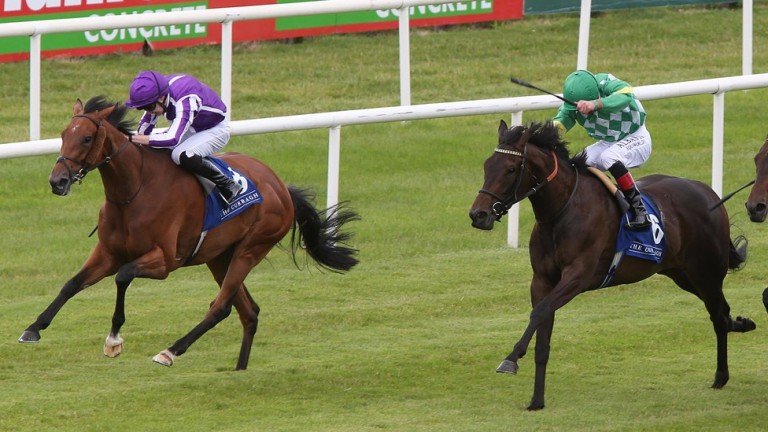 Kailee (right) was in-season not long before an excellent effort at the Curragh last time.
