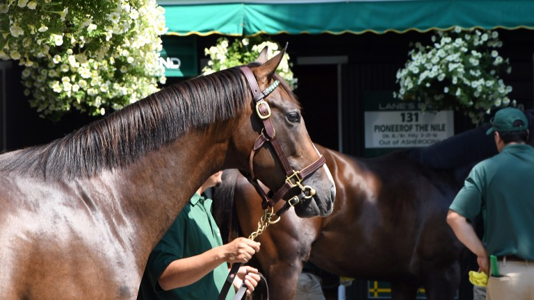 A yearling is paraded during the Fasig-Tipton Saratoga Sale