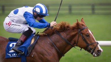 Psychedelic Funk: Ger Lyons colt struck at Naas last month