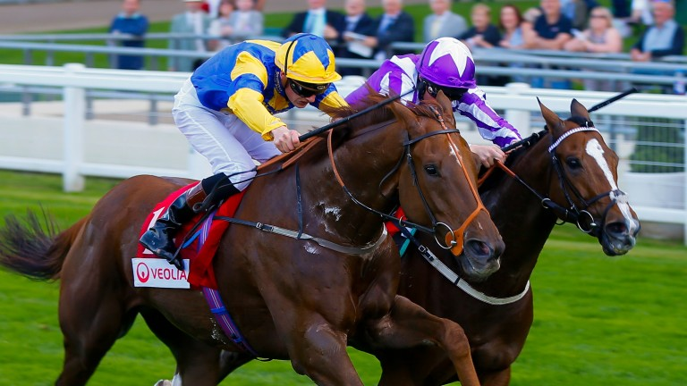 Cricklewood Green (near side) returned to form with an Ascot win last time