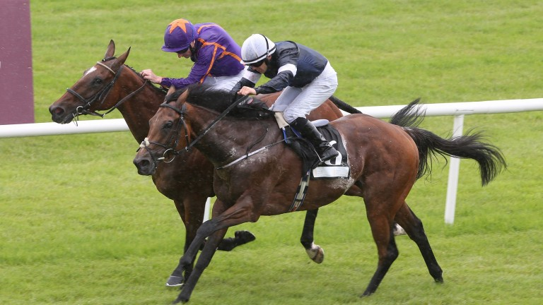 Rekindling finished with a wet sail to win the Curragh Cup last time, seeing off Wicklow Brave