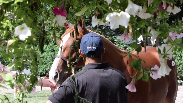 A lot shrouded in flowers during the first day of the Fasig-Tipton Saratoga Sale