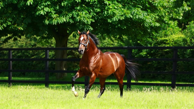 Toronado - A winner of the Sussex Stakes from Dawn Approach and Declaration Of War