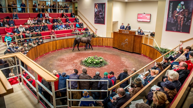 Selling gets underway at the Goffs UK complex in Doncaster on Tuesday