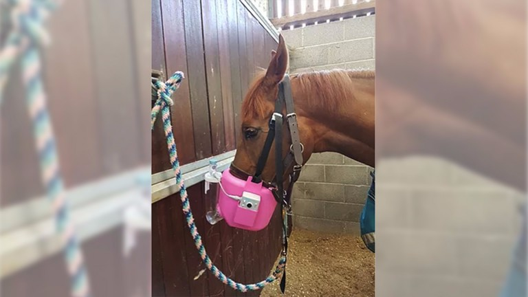 Jo Davis's Marmite sporting a nebuliser to help alleviate hay fever symptoms