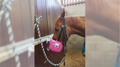 Jo Davis's Marmite sporting a nebuliser to help alleviate hayfever symptoms