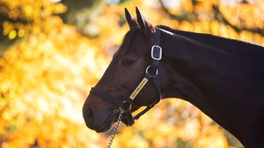 Sea The Stars: earned his highest RPR in the Irish Champion Stakes