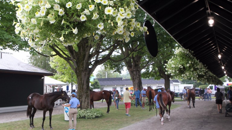Lots being inspected at one of Fasig-Tipton's sales complexes