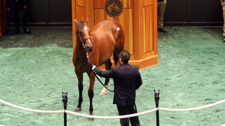 This City Zip colt, topping the session at $350,000, kept his recently deceased sire's name in lights
