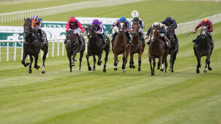Sioux Nation (far left): On his way to winning the Phoenix Stakes on Sunday
