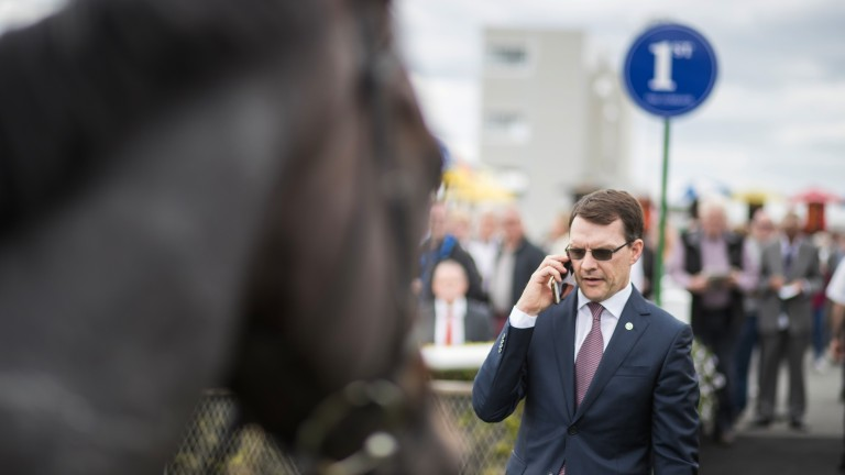 Aidan O'Brien has rattled off 14 wins at the highest level so far this season, two more than this time last year