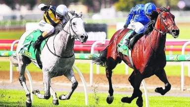 Bet365 Geelong