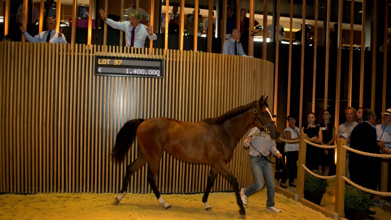 The Galileo colt out of Prudenzia sells for €1.4 million to Coolmore and the Mayfair Speculators in 2016