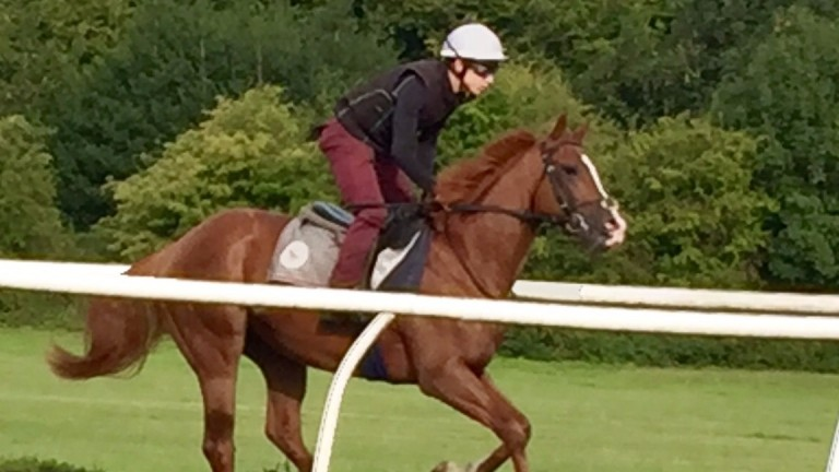 Son of a legend : Jamie Piggott rides out for Roger Varian