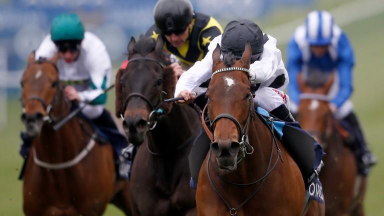 Marsha: set to tackle Lady Aurelia and Battaash again at York