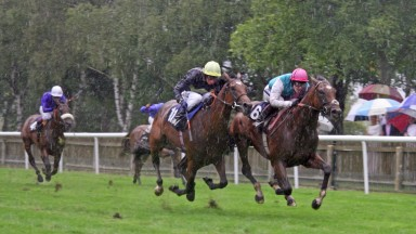 Frankel (right) leads home Nathaniel on their racecourse debuts