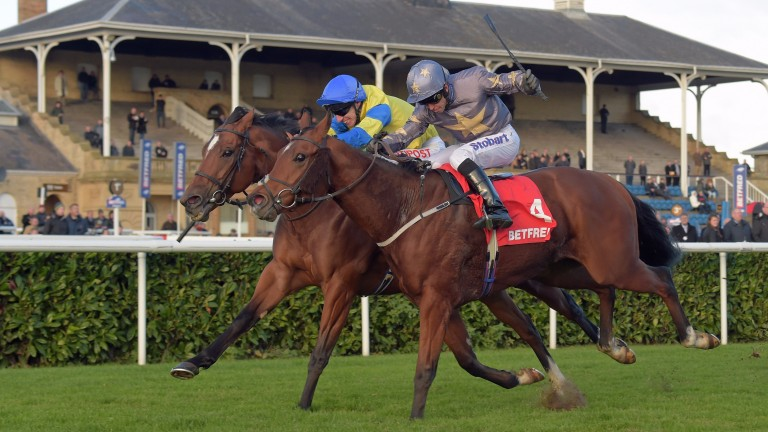 Growl (nearside) is favourite to give Richard Fahey a third win in the sprint