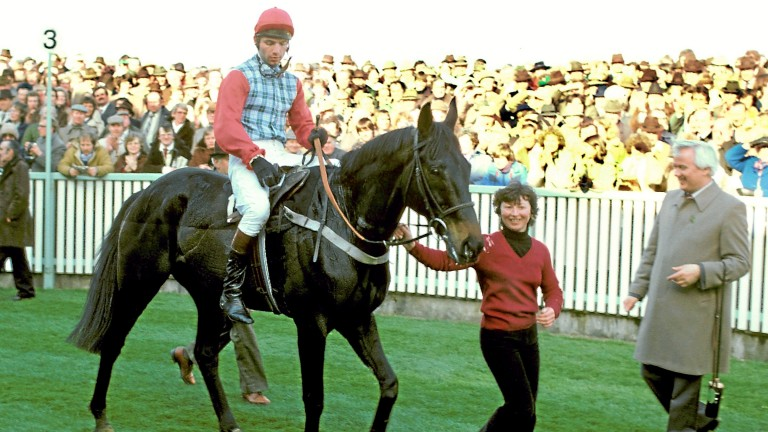 Sea Pigeon and John Francome return after winning the 1981 Champion Hurdle