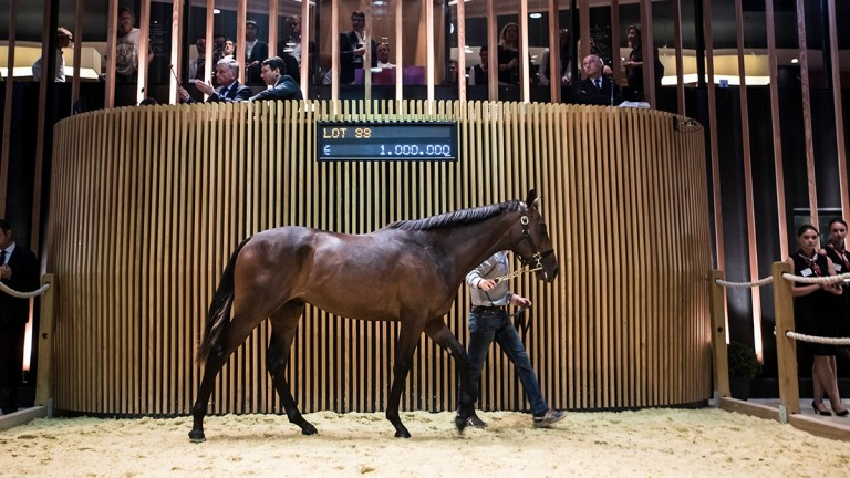 The Galileo half-brother to Ectot and Most Improved bought by MV Magnier on Saturday