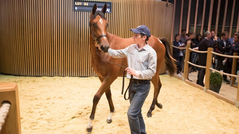 This Galileo filly is the latest expensive yearling out of Monceaux's Prudenzia