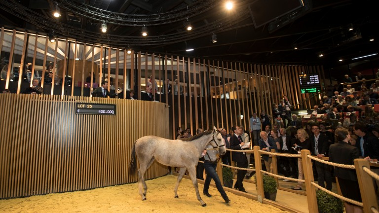 This Shamardal filly was snapped up by Alex Solis on behalf of LNJ Foxwoods