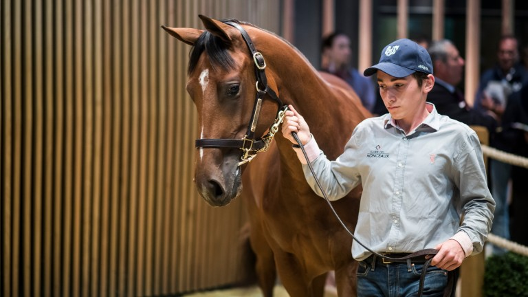 The Galileo filly out of Prudenzia sold for €950,000 at Arqana last August