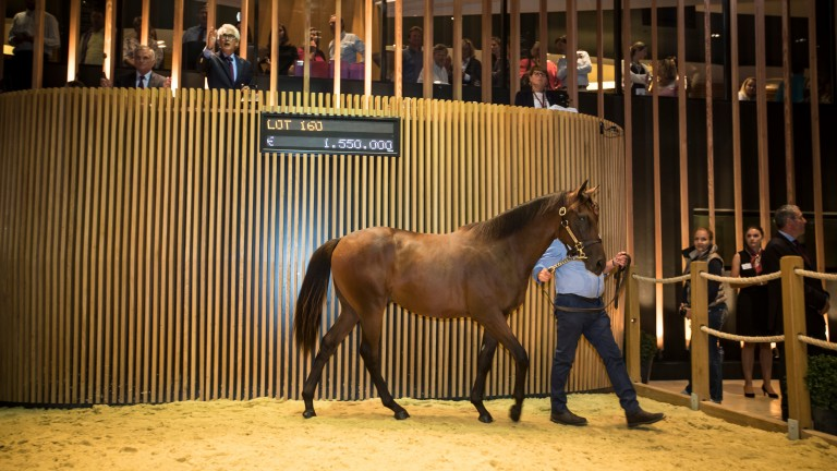 This Dubawi colt is the most expensive yearling sold at Arqana since John Ferguson paid a record-breaking €2.6m for Parabellum in 2015