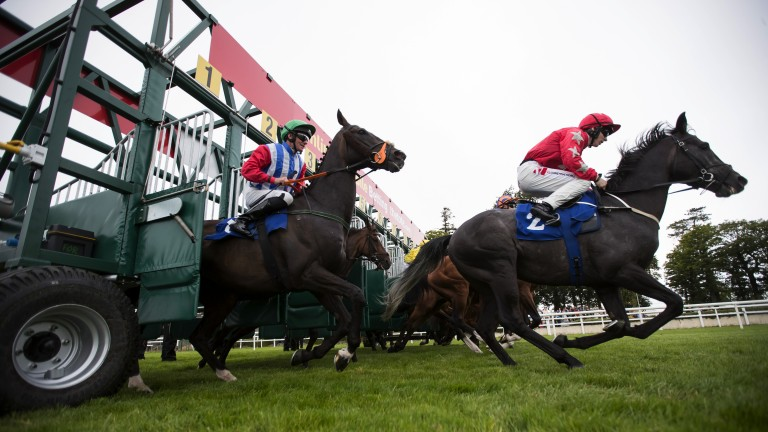 Mick Easterby's device is intended to stop horses ducking under the gate before the start