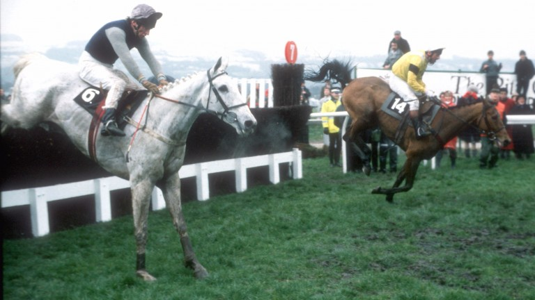 Desert Orchid (near side) jumps the final fence behind Yahoo before winning the 1989 Cheltenham Gold Cup