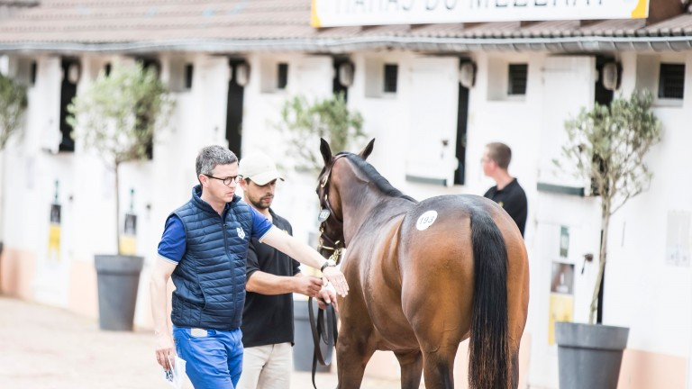 Roger Varian inspects a yearling at the Arqana August Yearling Sale