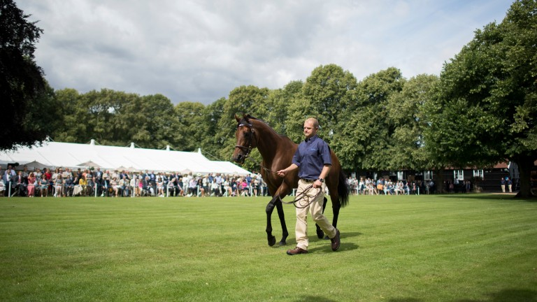 Darley patrons were given a preview of a forthcoming attraction at the stud's stallion parade in July
