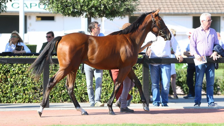 This Siyouni colt topped a busy day's trade at the V2 Sale at €110,000