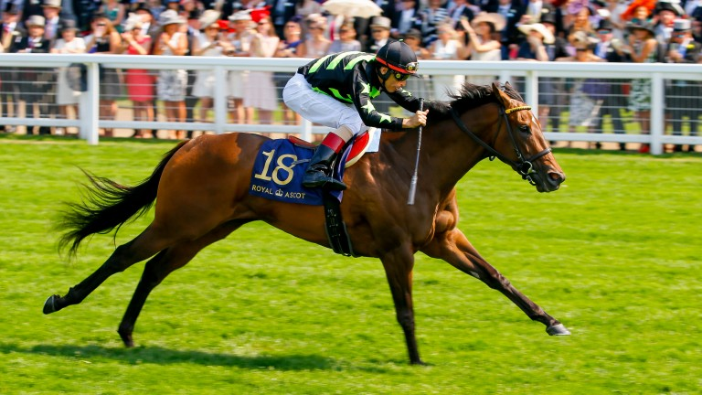 Lady Aurelia: bids to remain unbeaten at 5f