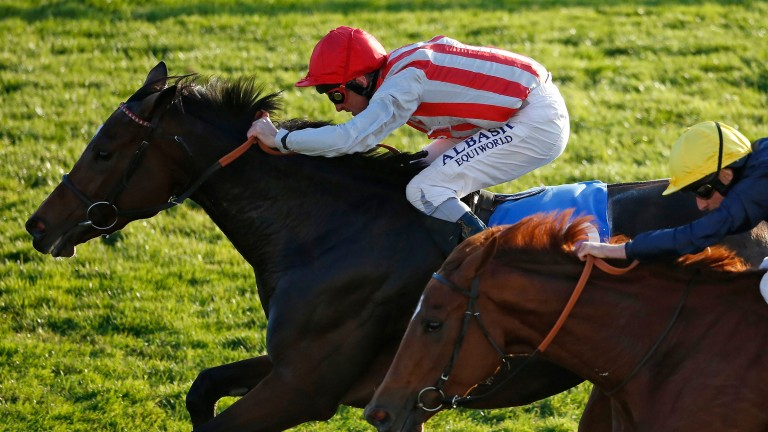 Chain Of Daisies: beat the mighty Ulysses in the Winter Hill Stakes last year