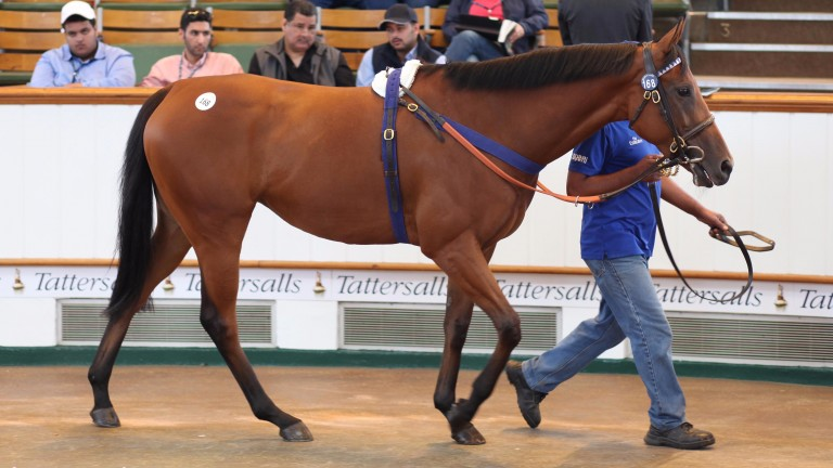 Camargue: the half-sister to Threading going through the ring at Tattersalls in July
