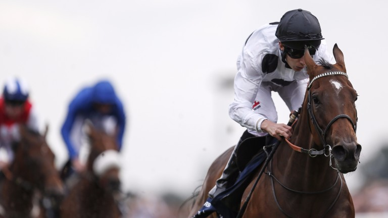 Marsha: one of three Group 1 winners by Acclamation