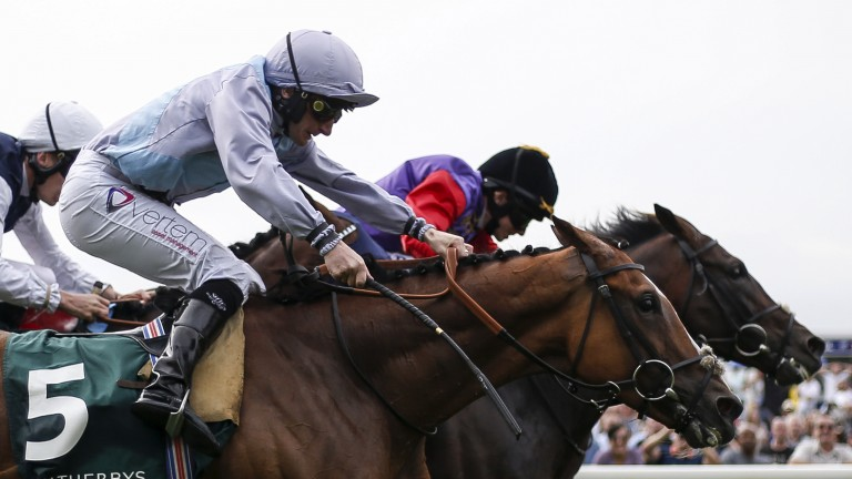 Darmouth (right): just foiled in Lonsdale Cup but set to seek compensation in Irish St Leger