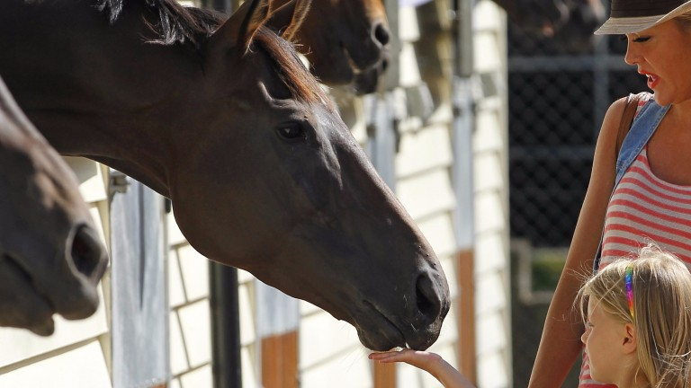 Meet the horses: the public are welcome at Epsom Open day