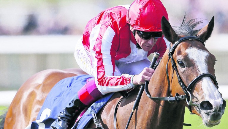Daban: the Nell Gwyn winner may not be able to race again