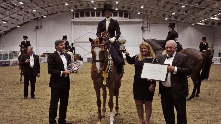 Wild West and Lizzie Harris: ROA and Goffs UK Supreme Champion with judges David Minton and Yvette Dixon.