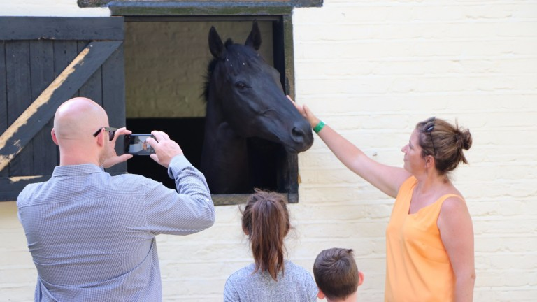 One equine star is popular at Adam West's Thirty Acre Barn yard in Epsom