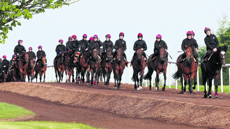 Ballydoyle: the appeal hearing will eventually determine whether racing stables are agricultural workplaces