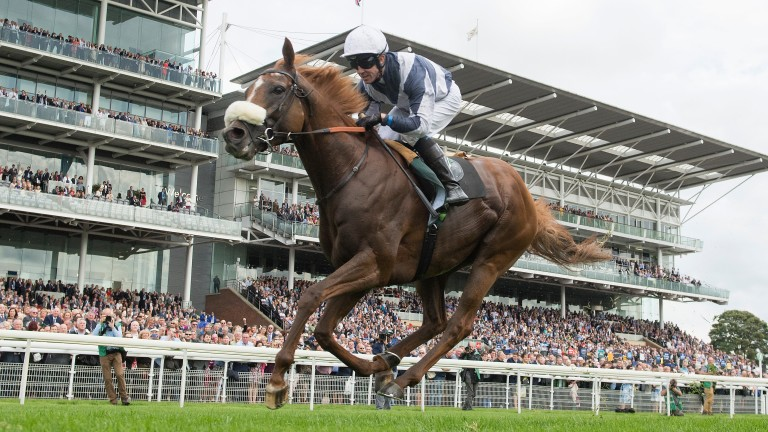 Ulysses (Jim Crowley, pictured winning the International Stakes at York, could go for the Arc