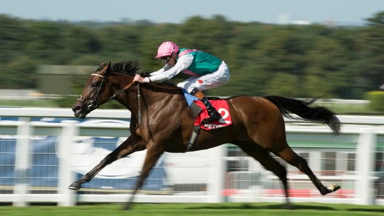 Kingman: won the Solario Stakes for John Gosden in 2013