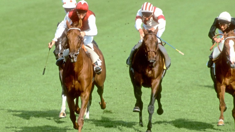 Oh So Sharp (Steve Cauthen) completes the fillies' Triple Crown in the 1985 St Leger