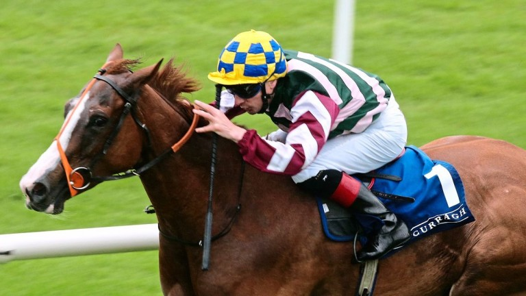 Creggs Pipes won seven times for the Delphi Six Syndicate